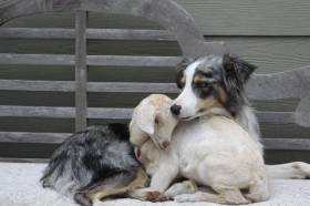 CRAZY WEATHER = WILD DOGS